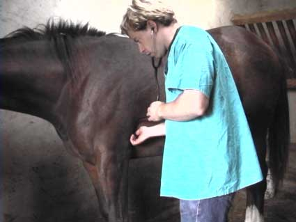 Examination of the heart in the colic patient.