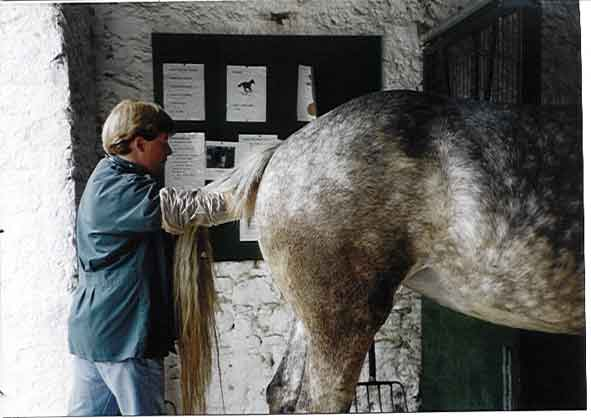 Examination of the mare.
